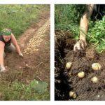 Как без лишнего труда и опасной химии растить полезные овощи для своей семьи