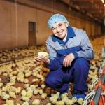 Мировое птицеводство, крупнейшая птицефабрика и гигантский шашлык