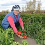 Государство помогает вырастить экологически чистую продукцию