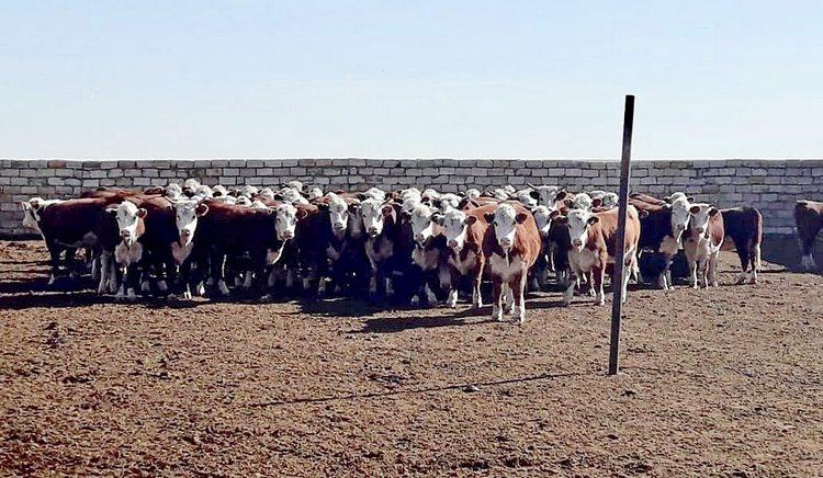 Фото: пресс-служба АО «Фонд финансовой поддержки сельского хозяйства»