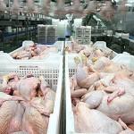 Россия отменила ограничения на ввоз птицы, мяса птицы и яиц из СКО