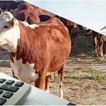 Как облагаются налогом суммы субсидий, полученные на развитие племенного животноводства?