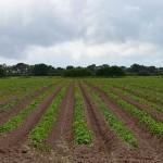 Карагандинские фермеры составляют электронные карты сельхозугодий