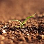 Земельный вопрос: когда альтернатива наказуема