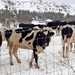 Порядка 3-х млрд тенге направлено на финансирование сельского предпринимательства в Туркестанской области