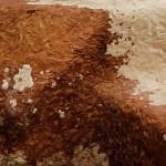Грибной мицелий: новая платформа для технологий будущего