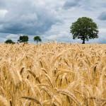 Новые субсидии для фермеров от ЕБРР покрывают до 75% расходов