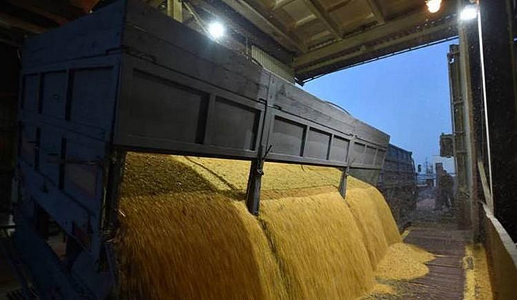Разгрузка кукурузы в Украине. Фото: ©ФАО/Геня Савилов (Genya Savilov)