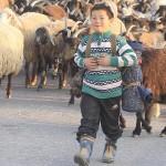 Фермеры на переднем крае борьбы с устойчивостью к противомикробным препаратам