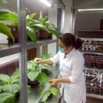 Ноу-хау: казахстанские учёные используют насекомых в борьбе с вредителями