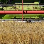 Цифровизацию активно внедряют в своих хозяйствах аграрии и фермеры СКО