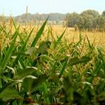 Станет ли индексное страхование обязательным для фермеров РК?