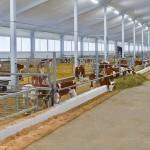 На севере Казахстана в депрессивном селе открыли молочную ферму