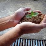 «Скамейка запасных» аграрных учёных пустеет