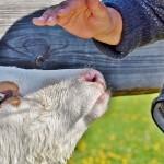 Карагандинские фермеры на свои кредиты никак не могут купить скот