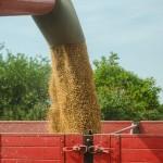 Сколько зерна планирует экспортировать Казахстан с нового урожая