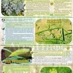 Инфографика «Сорняки и их свойства»