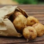 Био-картофель из пробирки селекционируют в Павлодарской области