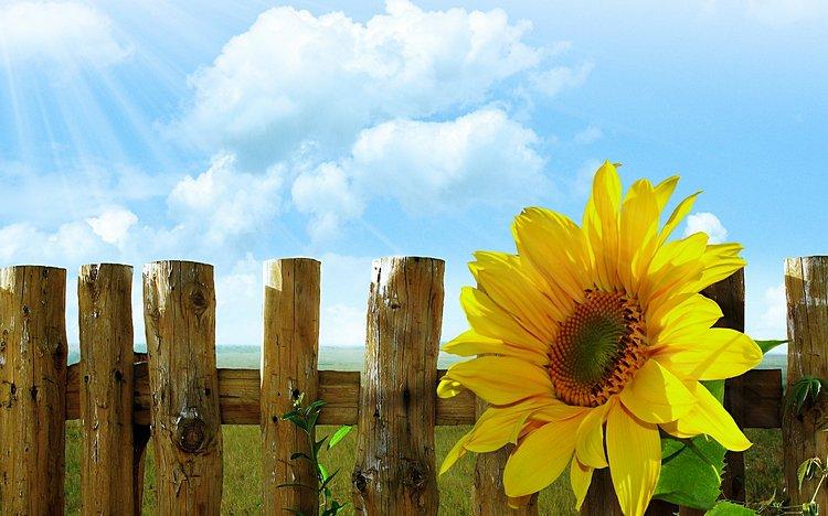 Фото: ©Larisa-K / pixabay.com
