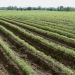 Ученик из Тараза разработал карту посевов сельхозкультур
