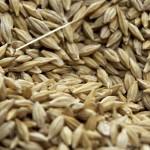 Туркестанская область на 100% обеспечена семенами для проведения посевной