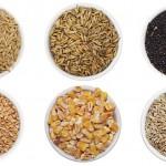 Новая схема субсидирования семеноводства внедряется в Казахстане