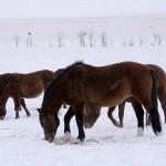 Сельчане Костанайской области смогут купить скот в кредит