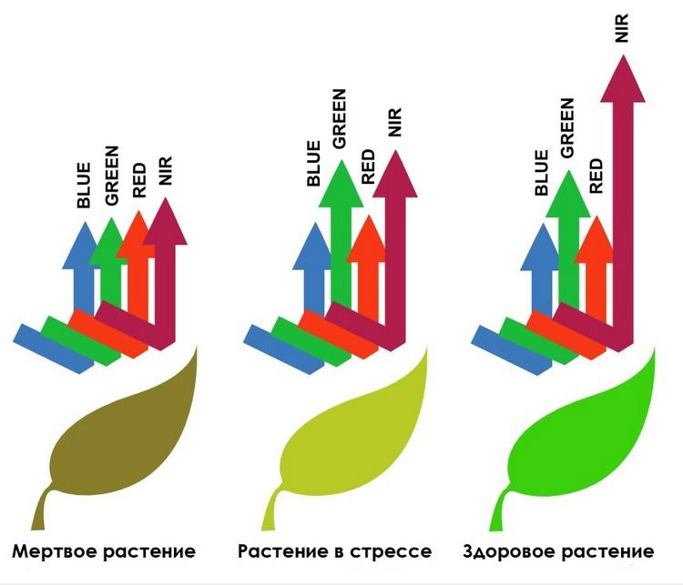 Отображение спектральных кривых на снимке растительного покрова