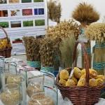 Алматы облысының фермерлері тұқым мен тыңайтқыштарды 20% арзан сатып алу мүмкіндігіне ие болды