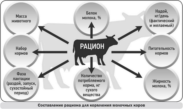 2_Составление рациона для кормления молочных коров
