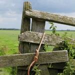 В Казахстане не используются около 2 млн гектаров земель, – МСХ РК