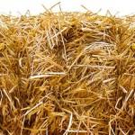Сельские школы Павлодарской области скоро смогут перейти на биотопливо