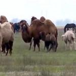 На OTAU TV появится телеканал, созданный на деньги туркестанских аграриев