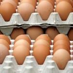 Жительница Актюбинской области бесплатно раздает малоимущим односельчанам яйца