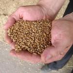 Крестьянские хозяйства оказались на грани разорения в Павлодарской области