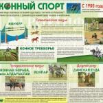 Инфографика «Конный спорт»