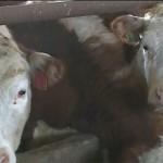 Молочно-товарная ферма на 1200 коров появится в Жуалынском районе