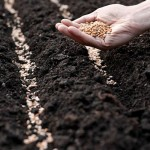 В крупных рисоводческих хозяйствах Кызылординской области началась подготовка к посевной