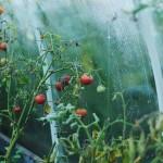 Челябинские учёные научат аграриев ЕАЭС выявлять стресс у растений