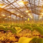 Philips анонсировали новые осветительные решения для растениеводства