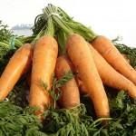 Соединения, обнаруженные в моркови, способны помогать в лечении болезни Альцгеймера
