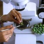 Будущее продовольствия зависит от будущего безопасности продуктов питания