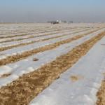 Түркістанның Жетісай ауданында 77 мың гектар жерге егін егіледі