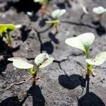 Биология вместо химии: 6 простых советов по огородным экспериментам весной