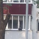 Появление медвежонка на балконе дома в Уральске объяснили в МСХ РК