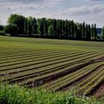 Восстановленная инфраструктура орошаемых земель в РК прослужит 25-30 лет