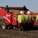 Поля Карагандинской области засеивают капустой и картофелем