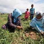 От снижения риска бедствий в сельском хозяйстве больше всего преимуществ получат мелкие фермеры