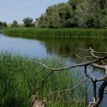 В Атырау изучением состояния реки Урал займутся учёные