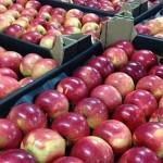 Туркестанские овощи и фрукты будут экспортировать в Татарстан
